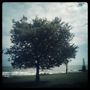 Tree at Chicago Lakefront by Marlene Kelly