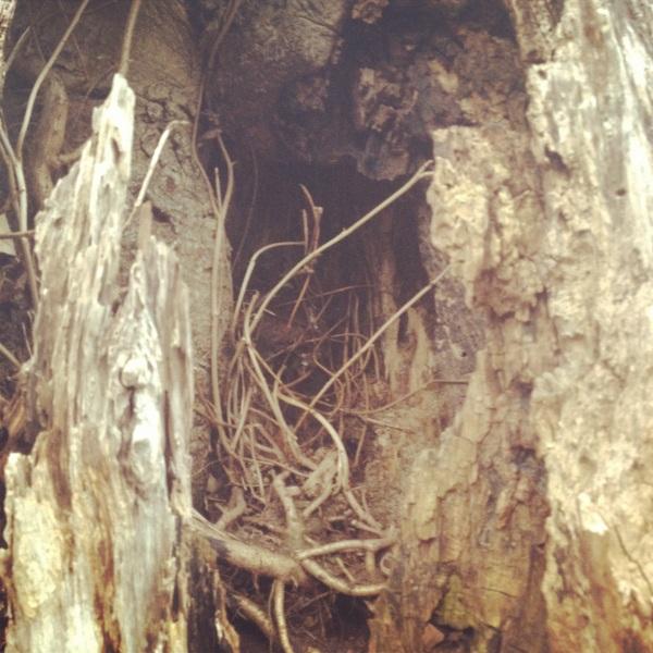 Inside the Heart of a Tree by Marlene Kelly
